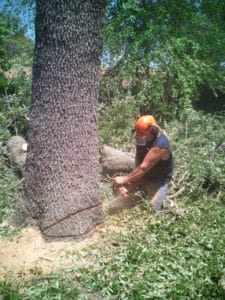 tree service pensacola job avery street