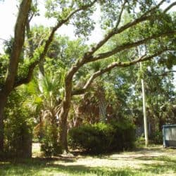 Pensacola Tree Removal