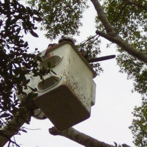 Pensacola Tree Pruning
