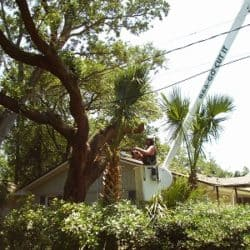 Tree Trimming Pensacola Coopersville
