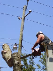 Tree Service Ludington