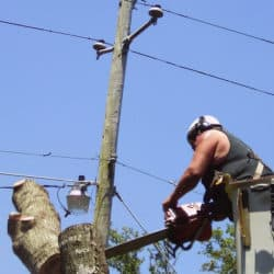 Tree Removal Pensacola