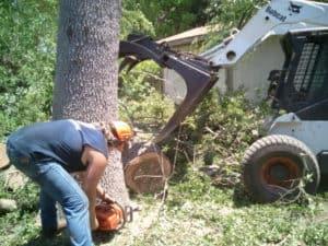 Tree Removal Ludington, MI